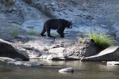 wildlife-nggid0241-ngg0dyn-0x360-00f0w010c010r110f110r010t010